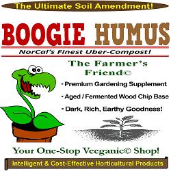boogie humus250x250