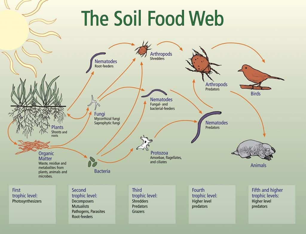 soil-food-web-large1272